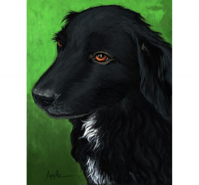 Annie - black dog portrait neighbor dog