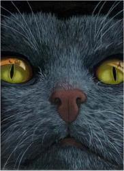 Cat Visions