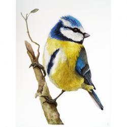 Blue-tit realistic bird watercolor