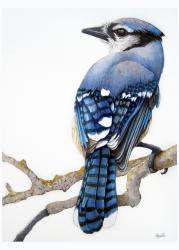 Blue Jay - bird portrait watercolor