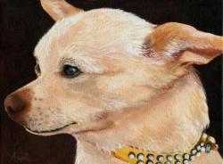 Classy Chihuahua
