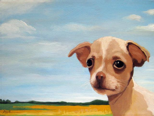 Chihuahua puppy dog animal portrait - King of his Land