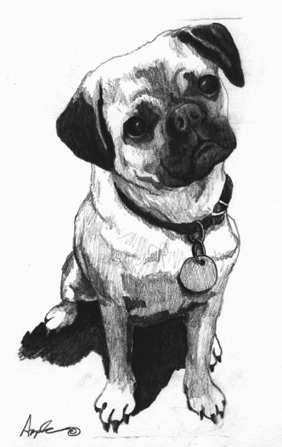 Little pug original pencil sketch