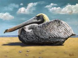 Pelican bird portrait