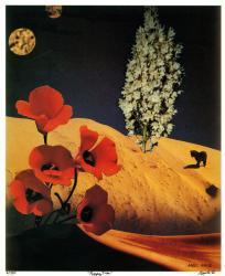 no.4 Poppy Tree