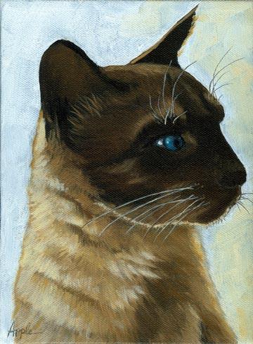 Distinctly Siamese - cat portrait