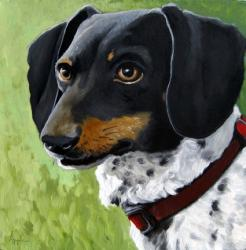 Simon - Dachshund dog portrait