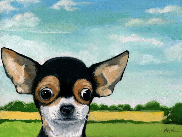 What's Going On? - Chihuahua dog portrait