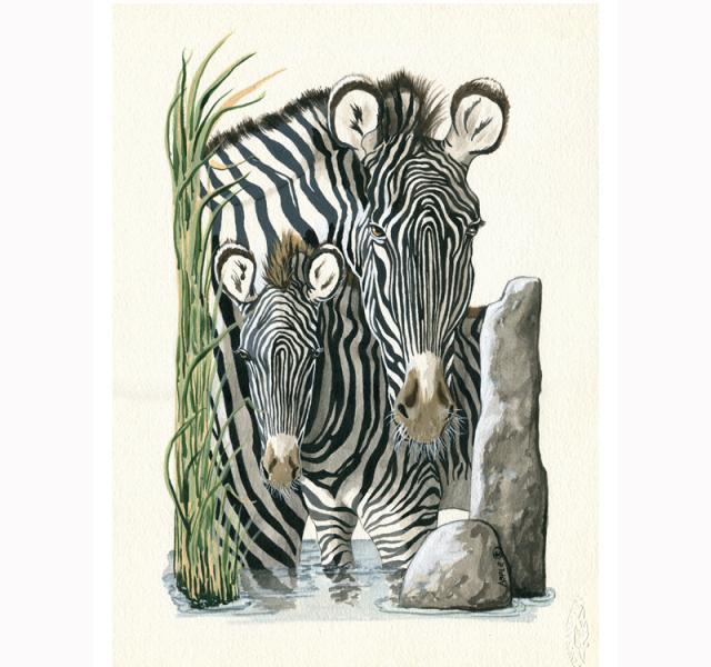 Zebra & Colt wildlife illustration portrait painting